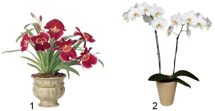 1) Милътония (Miltonia) или (2) фаленопсис (Phalaenopsis).  Нам потребуются следующие материалы: * Плетеная корзинка...